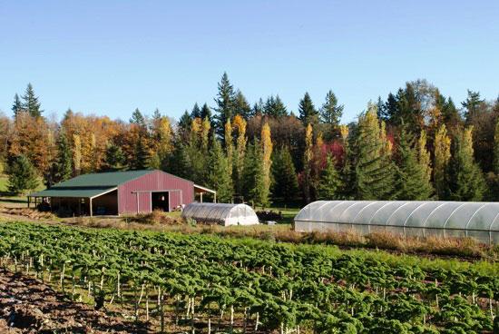 beautiful-farm-landscape20jpg